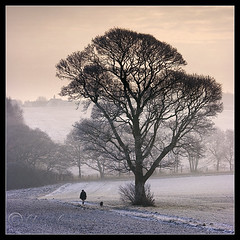 ... (Chrisconphoto) Tags: mist cold tree fog alone freezing walker solitary sthelens crank dogwalker chrisconway goodlight billinge
