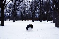 assailants (londonscene) Tags: snow cold girl canon dress lydia assailants