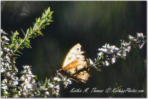 Butterfly sunlit