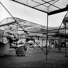 PhoTones Works #019 (TAKUMA KIMURA) Tags: photonesrolleiflex35e neopan 400 presto sun dried black cat harbor モノクロ 猫 日生 カメラ目線 野良 風景 takuma kimura 木村 琢磨 木村琢磨