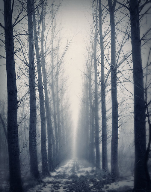Tree Alley Fog 3/52