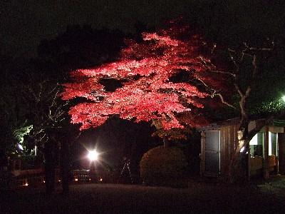 【百草園】紅葉観賞