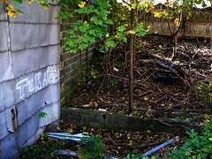 Over The Bricks (BACKYard Woods Explorer) Tags: tires abandonedbuildings norwaymaples casinosupplywarehouse martyrplants bloggedontuppy