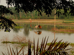Village of Bangladesh (Asif Adnan Shajal) Tags: nature landscape village gram bangladesh bangladeshi chuadanga matrivumi villageofbangladesh asifadnanshajal chuadangabangladesh asifadnanshajalphotography villagebangladesh