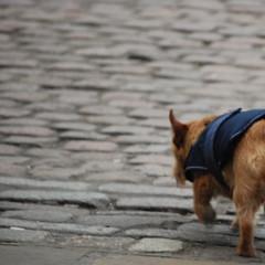 Big world, small dog (Spannarama) Tags: uk dog london greenwich cobblestones cobbles odt