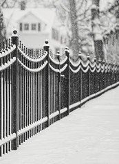 Happy Fence Friday {Snow Swag} Edition! (pixelmama) Tags: winter blackandwhite bw snow fence gettyimages hff lakebluffillinois fencefriday snowswag