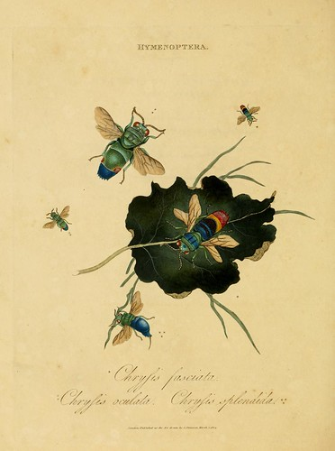 016-Crysis Fasciata- An epitome of the natural history of the insects of India…1800- Edward Donovan