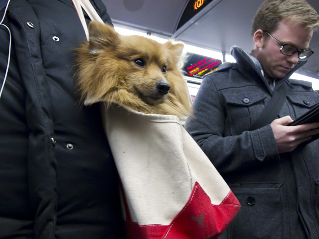Doggy bag, on the Q Train