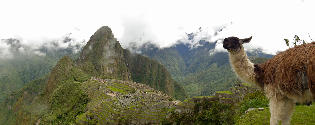 Llama in Front of Machu Picchu and Huayna Picchu