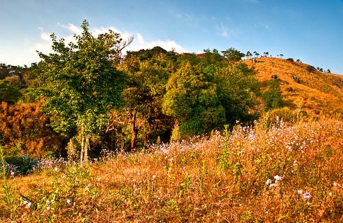 Munnar Hilltop