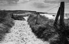 Quiberon, B&W, 3 (Patrick.Raymond (3M views)) Tags: bretagne mrbihan plage mer sentier chemin argentique tmax nikon expressyourself