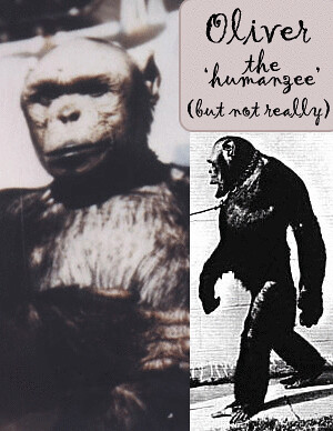humanzee_oliver
