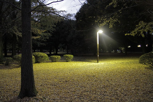 Yoyogi Park illuminated by lone light