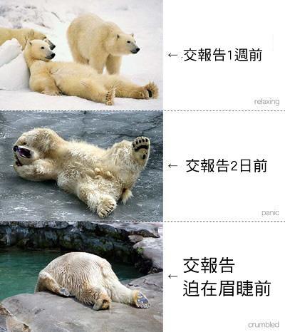 以白熊比喻現在的大學生