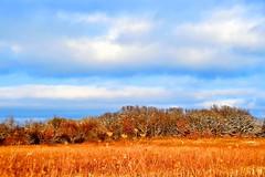 ILLINOIS PRAIRIE WINTER LANDSCAPE (thomassylthe) Tags: landscape illinois shadows farmland handheld farms prairie forestpreserve nikkor whitefence hardwoods backlite godscreation coolsky lowiso woodedarea frozenlandscape wintercolor snowtrails burnidge naturearea d700 combsroad prairiemarsh tyrellroadrt72 powderedtrees dormatveg 28200mmnikkorglens skyvlue