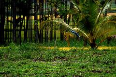 Srirangapatna 086.CR2