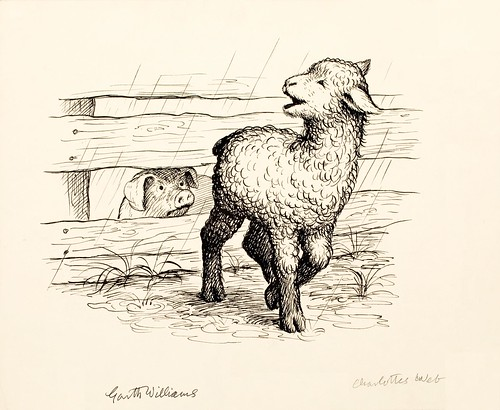 black ink drawing of lamb in rain and pig looking through wooden fence