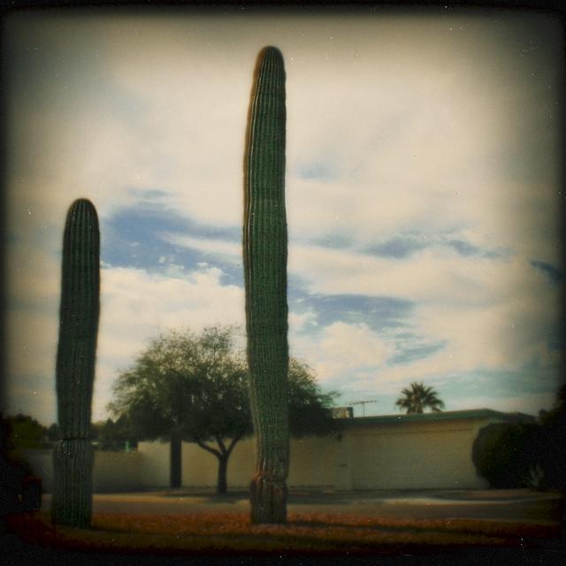 phoenixcactus