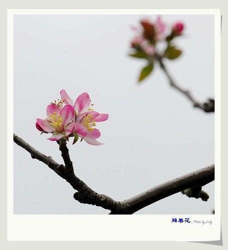 DSC_8602-1A.jpg
