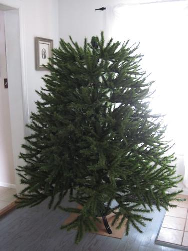 Tree- Step 5