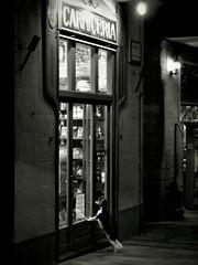 Desire / Deseo (SantiMB.Photos) Tags: castelldempries costabrava girona catalunya espaa spain altempord empord bw bn tienda store perro dog carnicera butcher shop noche night lowkey bromoil thelittledoglaughed
