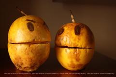 Maracujs In love  ;-))) (Dircinha -) Tags: food love brasil fruit canon poser funny plantas do  fruta um passiflora maracuja pelas maracuj fruto gnero mamangava maracujazeiro produzido dircinha maracujs macroyahoo