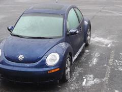 frozen beetle