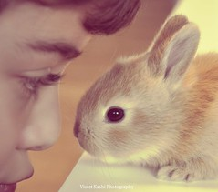 Eskimo kissing (Violet Kashi) Tags: boy pet cute rabbit bunny closeup profile myson