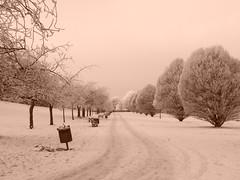 Bellahouston Park: Sepia (stuartpaterson) Tags: park wood city uk greatbritain trees snow tree ice scotland frozen woods frost forrest britain snowy path glasgow south scottish frosty walkway gb civic british southside icy wintersun wintery bellahouston unitedkingdon bellahoustonpark frozenpath scotlandwintersnow