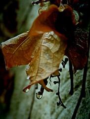 Otoo; Autumn; Outono (Javi Calvo) Tags: autumn rain lluvia chuva otoo outono