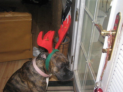 Christmas 2010 077