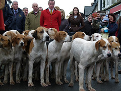 Hound-dog Day (Andy WXx2009) Tags: woman men dogs wales europe artistic candid streetphotography foxhounds cowbridge