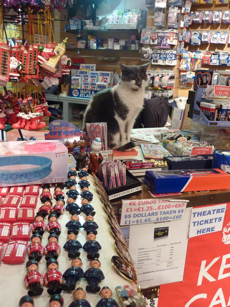 cat in charge of a Gift Shop