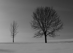 Barren (LeicaNokota) Tags: leica trees winter two sky bw sun snow cold detail tree landscape shadows pair scene double sharp clear crisp leafless desolate barren mn barely noclouds devoid unproductive carvercounty barrenland unfruitful dlux4 barelybarren