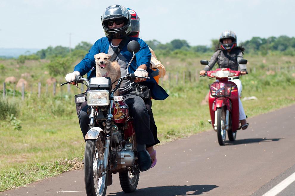 Un perro se para sobre el tanque de la motocicleta de su dueño mientras que viajan sobre la ruta 3 a la altura de la Ciudad de Emboscada en la tarde del domingo 19 de Diciembre. (Elton Núñez - Emboscada, Paraguay)
