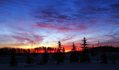 Good morning Christmas (Outspoken Images) Tags: trees sky canada colour skyline sunrise alberta 2010 pigeonlake