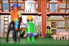 Taking Back Some Dream. (p@sco) Tags: horse cats love countryside campagna cavallo amore gatti playmobil 2010 2011