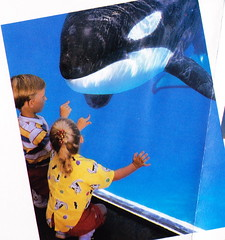 Kalina (Shamufan88) Tags: orlando orca shamu killerwhale marinemammal ramu seaword