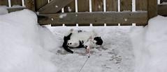 chat dans le froid d'hiver