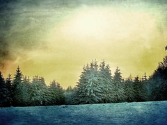 Blue winter (mamietherese1) Tags: blue winter ny  expression dire contemporaryart super il textures alsace vip tqm mot winterbeauty cubism callingallangels theworldwelivein quun fantasticnature memoriesbook concordians theenchantedcarousel awardtree tatot saariysqualitypictures artistictreasurechest capturethefinest qualitysurroundings sailsevenseas fleursetpaysages heavensshots natureallovertheworld abokehoflight lovelymotherearth healinglightofthespirit extraordinarilyimpressive art2011 greenbeautyforlife