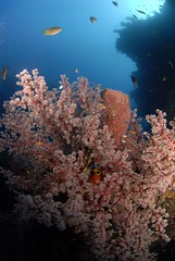 Bali diving Dive Concepts_067