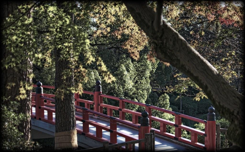 Red Bridge Through the Woods