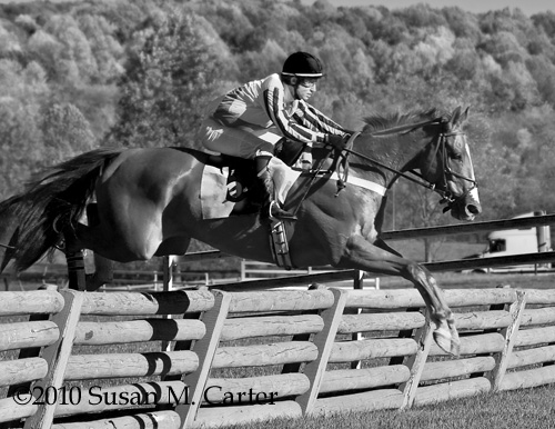 He's a Conniver and Jody Petty, steeplechase horse racing
