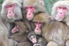 Monkey's dumpling (Masashi Mochida) Tags: family monkey awaji naturesfinest coth hyougo supershot rubyphotographer