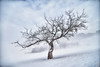 lonely tree (gregor H) Tags: winter mist snow tree landscape photography austria harmony balance gettyimages lonelytree asymmetric vorarlberg imbalance pprowinner thesecretlifeoftrees
