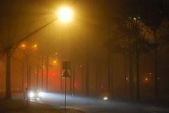 Foggy Night Ray of Light (goyasmee) Tags: auto street trees winter light car bomen ray denhaag thehague 2010 straat lichtstraat