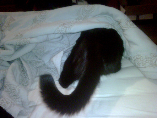sneaking under the covers.