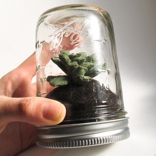 Black Thumb Terrarium- succulent no. 1