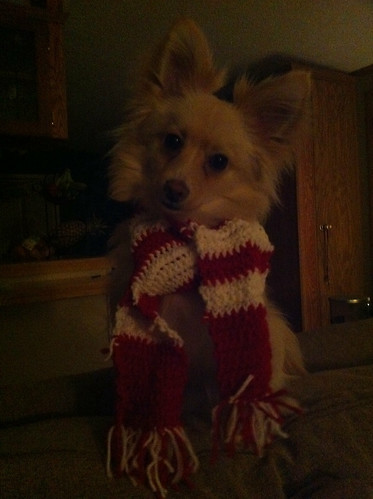 Tobys new scarf