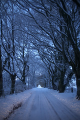 snowbound (.FuturePresent.) Tags: wood uk family blue winter sunset england naturaleza sun white mist snow cold color colour tree nature beautiful leaves fog rural landscape countryside scenery rboles colore britain united country scenic kingdom paisaje bosque freeze dorset future present claudia wilderness canopy gabriela wonderland marques winterwonderland wimborne vieira milllane unit10 futurepresent bowerchalke claudiavieira claudiagabrielamarquesvieira claudiagabrielamarquesvieiraportfolio forestgen uniti0 naturegen